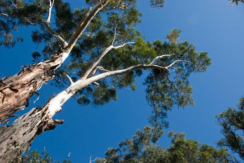 Sydney Sea-Eagles Nest